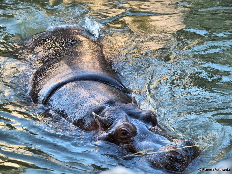 Zooloski Vrt Beograd Cena Ulaznice Radno Vreme Beo Zoo Vrt